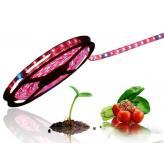 Фитоосвещение для роста и развития растений
